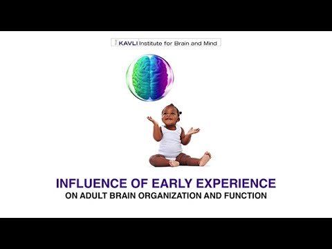 Introduction to Influence of Early Experience on Adult Brain Organization and Function