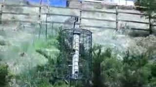 Birdbath And Birdfeeder