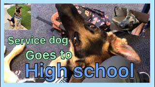 How high school really is with a service dog// OUR FIRST DAY