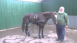 P2 - Breaking your own horse to harness - retraining a horse that bolted pulling a tyre.