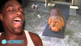 """Can We Say Animal Cruelty? """"obie, The Obese Dachshund""""!"""
