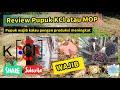 Gambar cover Review Pupuk KCl atau MOP