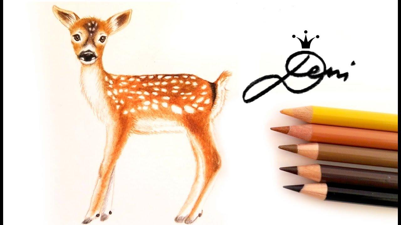 Wie Zeichnet Man Ein Reh How To Draw A Fawn как се рисува