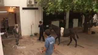 Fès, à dos d'âne - Faut Pas Rêver au Maroc (extrait)