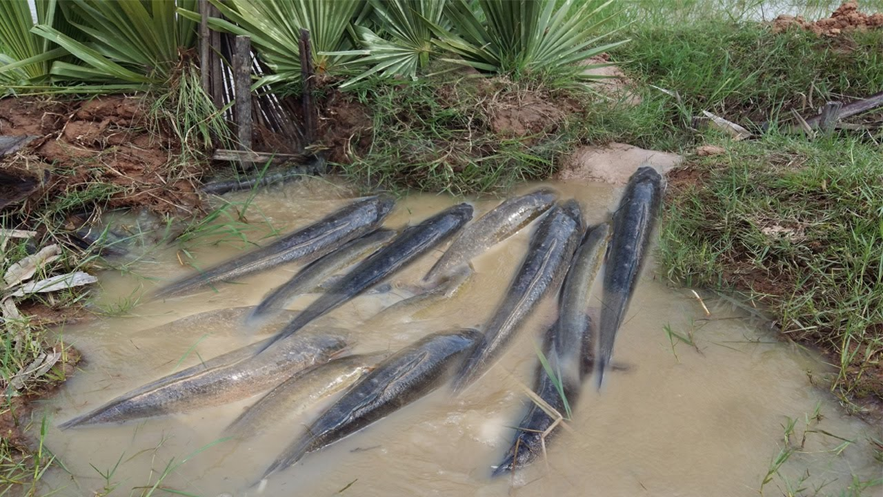 Creative boys make big pipe deep hole fish trap to catch a for How to make a fish trap for big fish