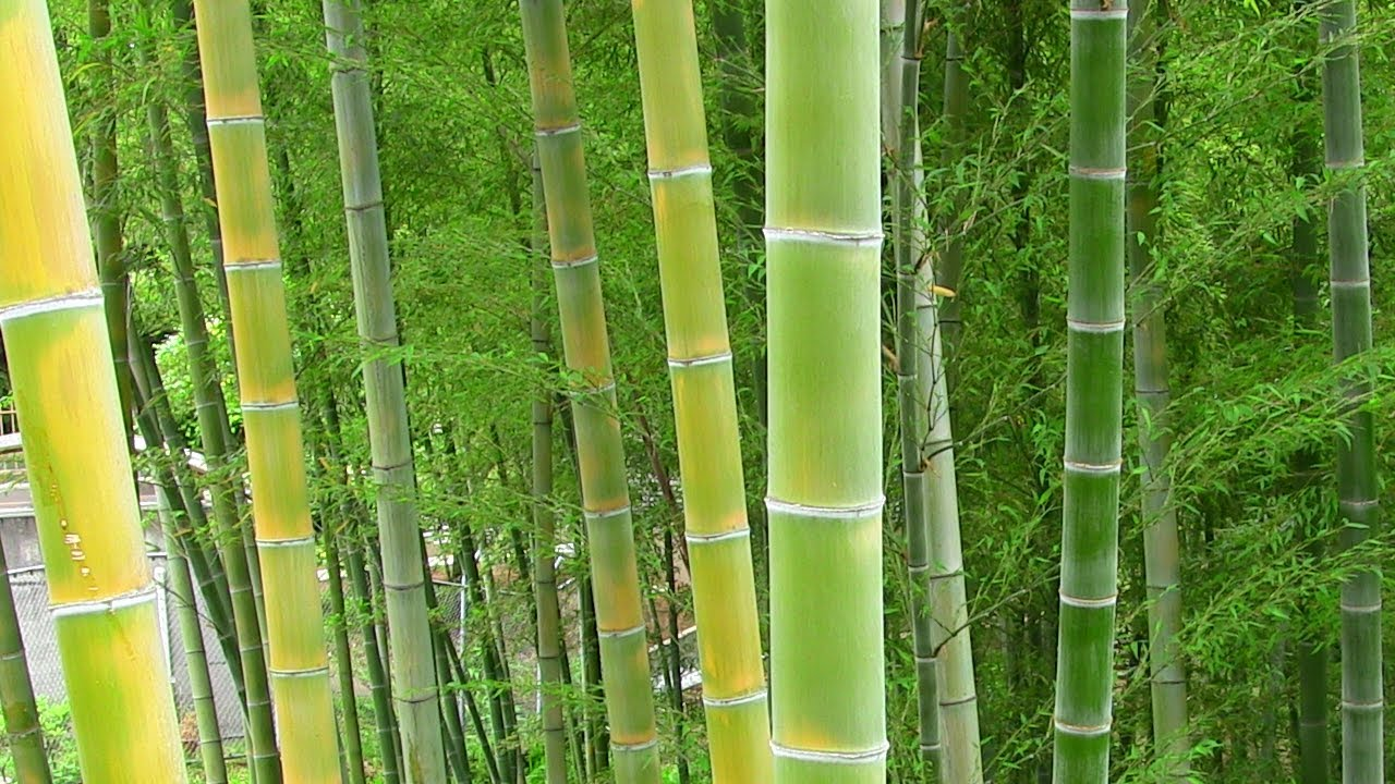 japanese gardens with bamboo Japan Update 2: Bamboo Garden - YouTube