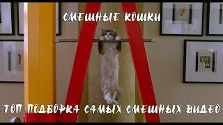 Смешные кошки | ТОП Подборка самых смешных видео про кошек и котов