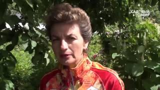 видео Когда выкапывать тюльпаны после цветения