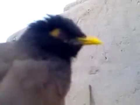 Bird Mimics the Sound of a Crying Baby - YouTube