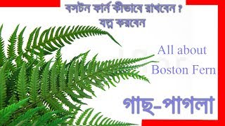 Boston Fern । How to care for Ferns । Growing Ferns In bengali