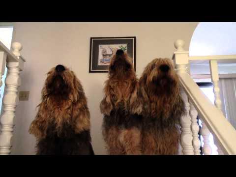 Blue Fairy Otterhounds 2015 -  Who's Singing?