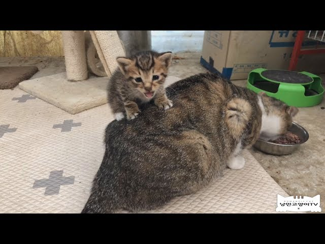 휴..또 생후 1개월 남짓 한 새끼고양이 발견I found another kitten!