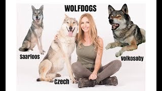 WOLFDOGS - WHICH ONE IS BEST?