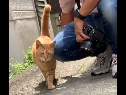 The Friendly Kitty Cats of Enoshima Island