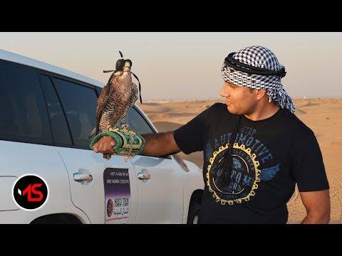 Evening Desert Safari Dubai with BBQ Dinner | 4×4 Dubai Desert Safari | mSharif Vlogs