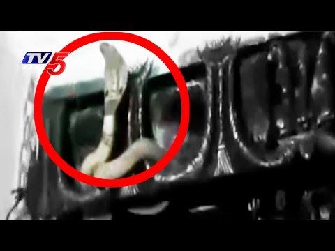 Maha Shivaratri 2017: Snake Darshan at Lord Shiva Temple in Nirmal District   TV5 News