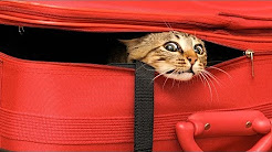 How to Travel with Your Cat | Cat Care