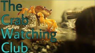 【さわがに水槽#3】クラブ ウォッチング クラブ~The Crab Watching Club~ thumbnail