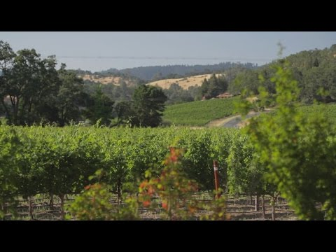 Destination Guide to Napa Valley | California | USA
