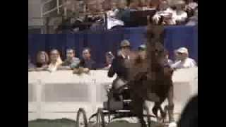 2009 Fine Harness Mare World Championship