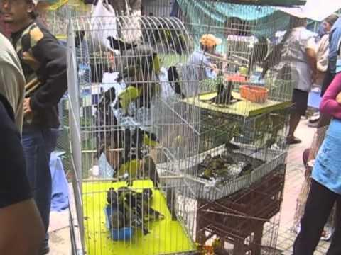 Feria De Tlacotepec De Benito Ju 225 Rez Http Www Tlaco Net