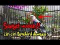 Ciri Ciri Lovebird Dewasa Sangat Mudah Buat Pemula  Mp3 - Mp4 Download