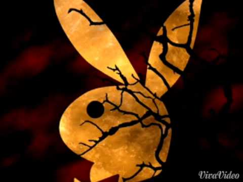 Rabbit macjeeva @ nandha