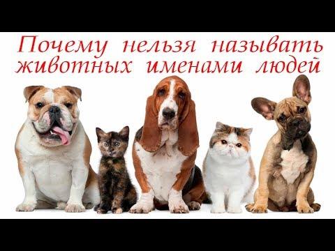 Нельзя называть животных именами людей #Светлана_Веда