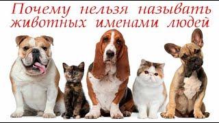Нельзя называть животных именами людей