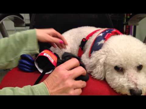 Best Boots for Your Dog!   Keep Doggie Safe