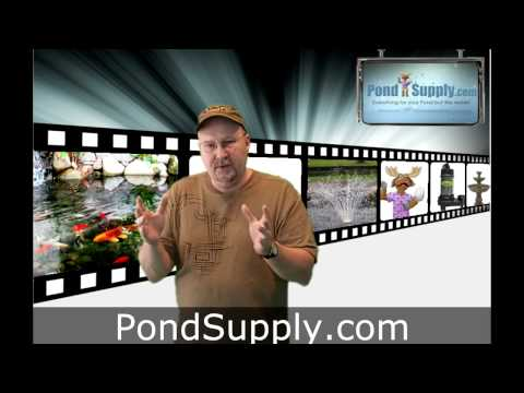 Identifying Problems In Your Backyard Pond.