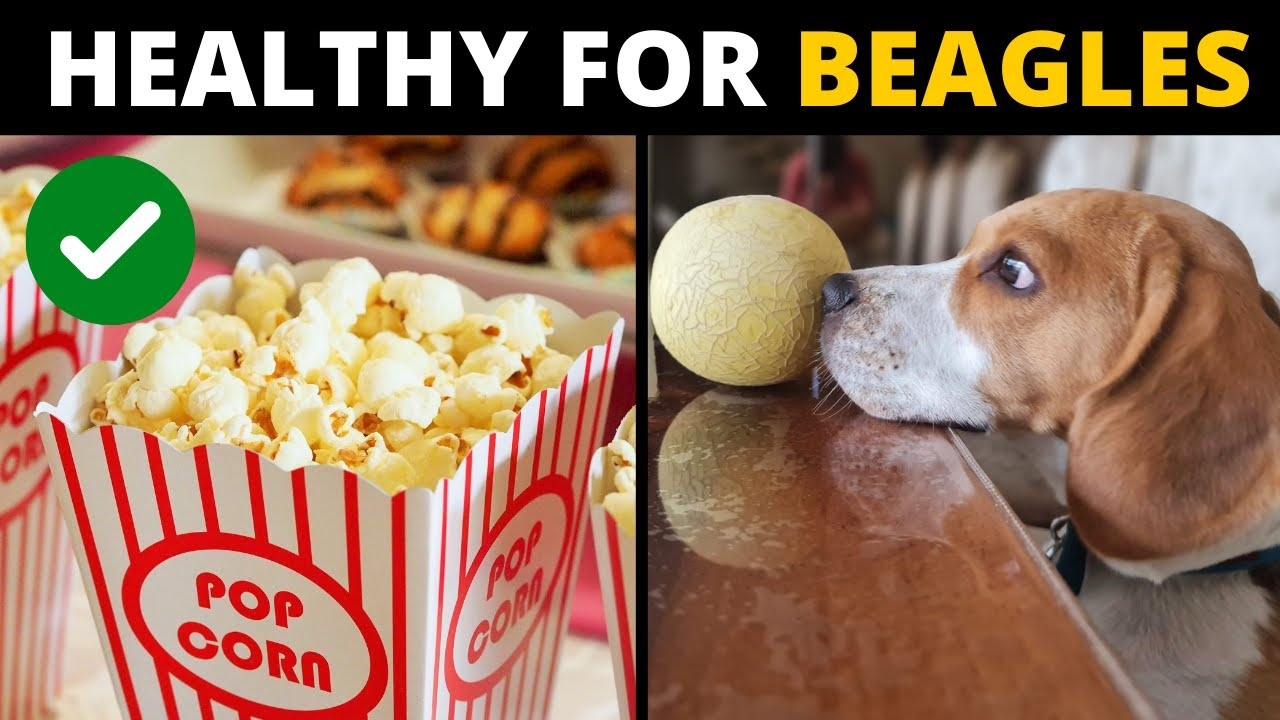 10 Human Foods that are Actually GOOD for Beagles