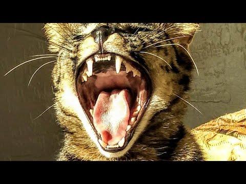 😺 F1 Savannah Cat ~ VERSACE ~ Growing Up !