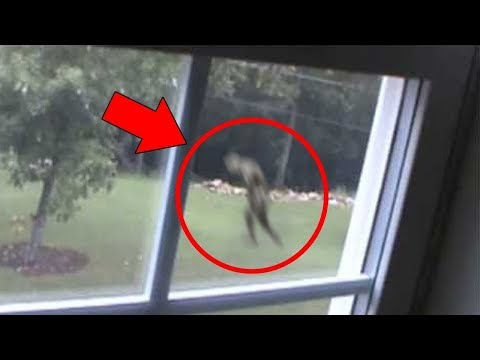 Top 10 Scary & Mysterious Creature Accidentally Caught On Camera