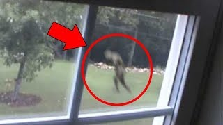 Top 10 Scary & Mysterious Creature Accidentally Caught On Camera- Unbelievable Creatures