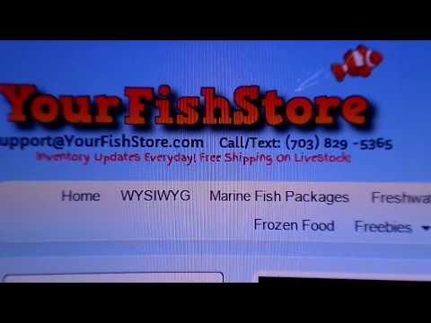 Best Websites To Order Fish From