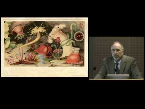 Sea Creatures in Glass (Leopold and Rudolf Blaschka ) on YouTube