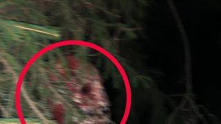 رجل يلتقط صورا لمخلوقات غريبة تتجول بين الأشجار بجانب بيته - قصة رعب