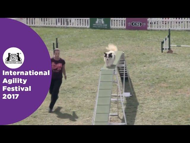 Kennel Club British Open Semi Final - Small | International Agility Festival 2017