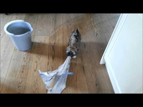 Lhasa Apso Dog Mop