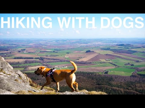 Hiking With Dogs! | Van Life in Scotland Ep. 17