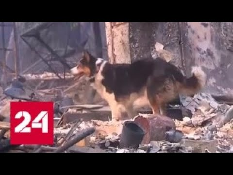 Число жертв пожара