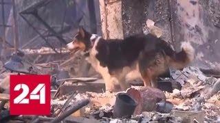 Число жертв пожара в Калифорнии выросло до 74 - Россия 24