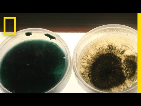 Oil-Eating Bacteria Could Be a Solution to Spill Cleanups | National Geographic