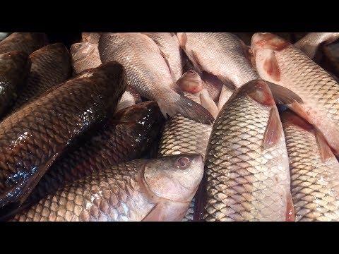 Night Fish market / Various kinds of fishes at night karwan Bazar.
