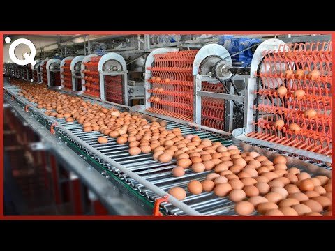 Food Industry Machines That Are At Another Level ▶7