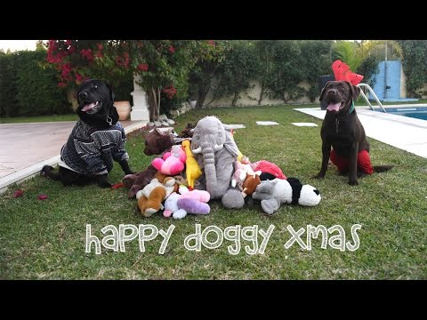 Have a doggy merry Xmas!
