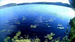 Ленинградская обл.рыбалка- лесное озеро, на удочку и рогатки  на карася июнь 2018