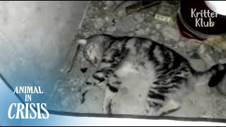 Lost Cat Found With Brain Damage Dying Alone In The Cement Room | Animal in Crisis EP83