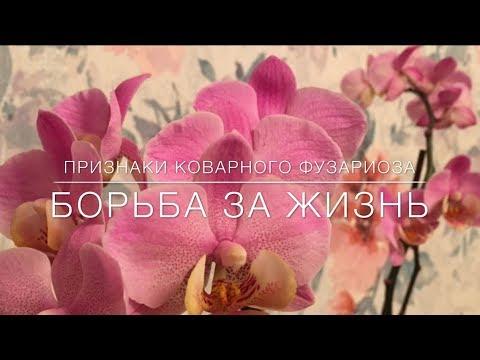 Признаки Коварного Фузариоза . Борьба За Жизнь...